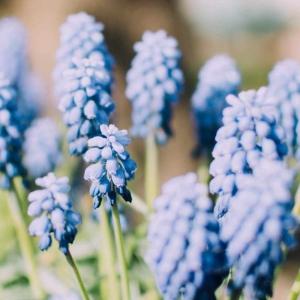 欧風ガーデニングの花