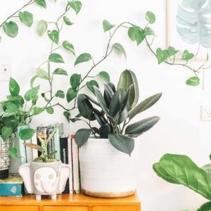 輸入住宅リビング観葉植物